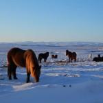 Jour 1 : Le Cercle d'or en hiver