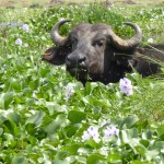 Jour 4 : Le lac de Naivasha