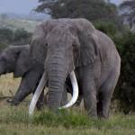 Jour 5 : Le parc d'Amboseli, paradis des éléphants