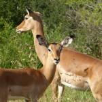 Jour 6 : Les parcs d'Amboseli et de Tsavo Ouest