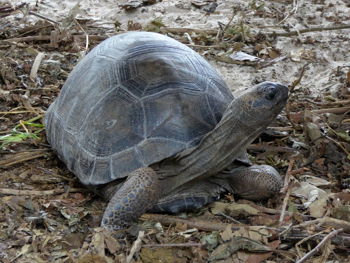 Un bébé tortue, de quelques centimètres seulement.