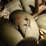 Jours 6 et 7 : Voir les coco-fesses et partir