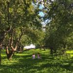 En rouge et vert : les parcs et domaines de Moscou