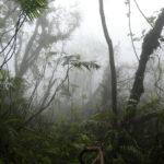 Nicaragua : Au sommet du volcan Monbacho, randonnée dans les brumes d'un monde perdu